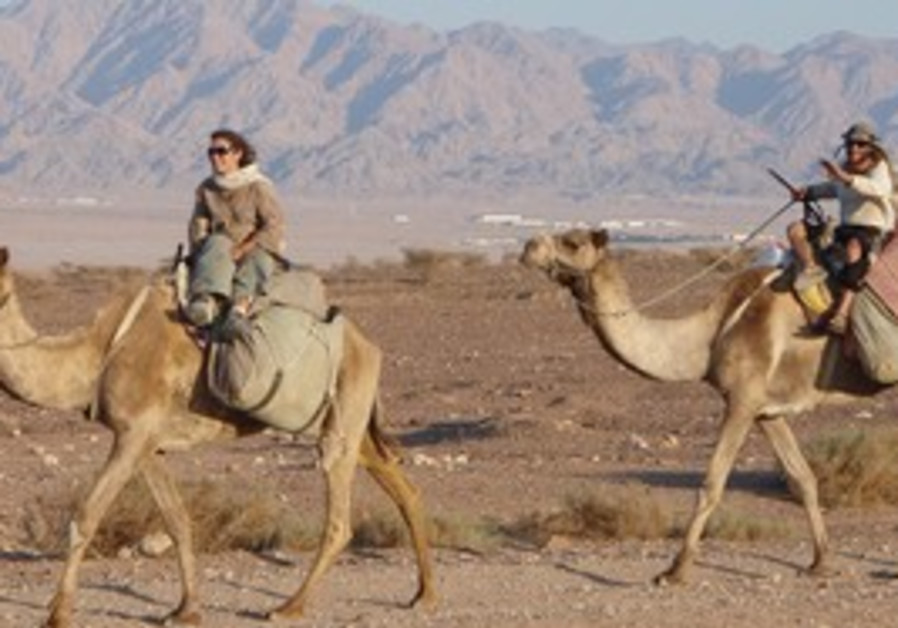 Camel rides in the Arava
