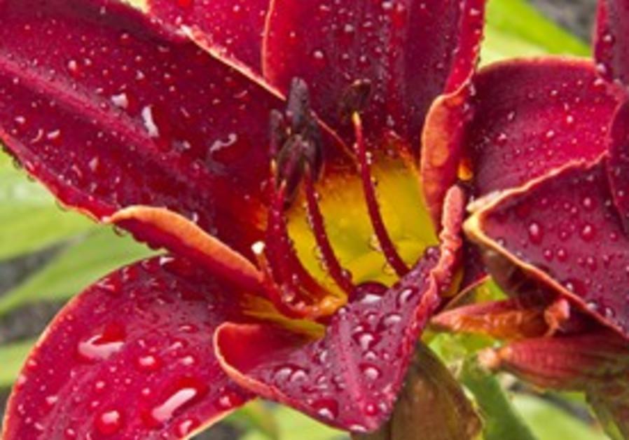 Close up a flower