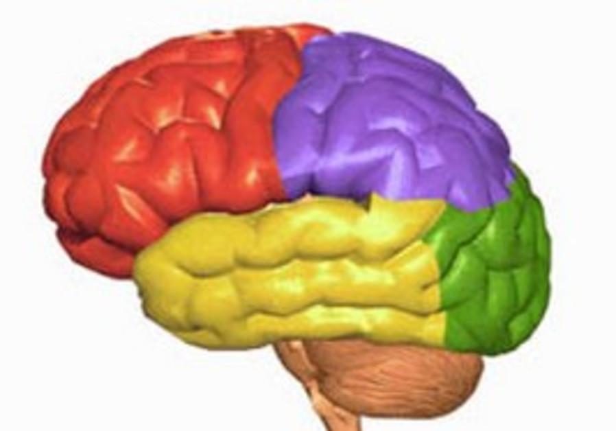 High blood sugar linked to brain shrinkage - Health & Science ...