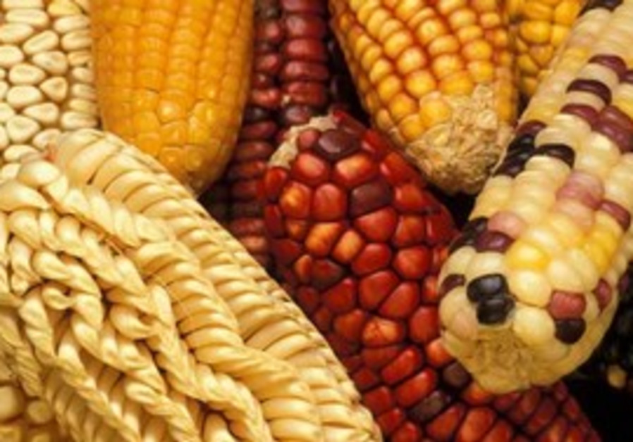 Various corn varieties