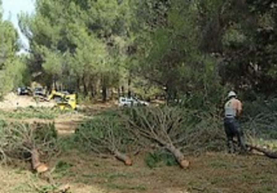 KKL-JNF distributes firewood to prevent theft