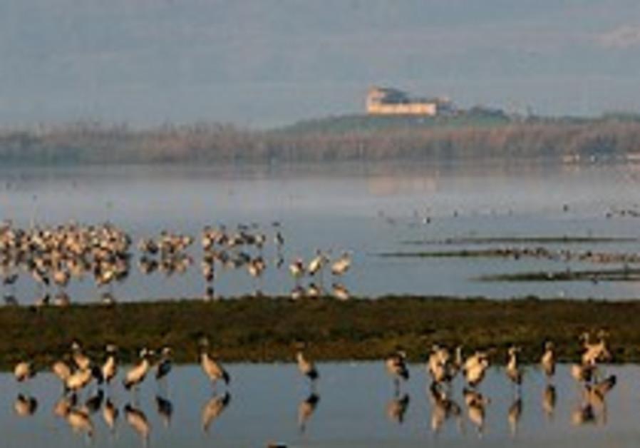 KKL-JNF: Record number of cranes visit Hula Lake
