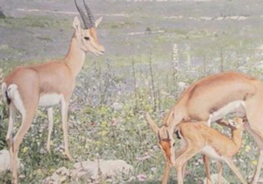 Wildlife art exhibit