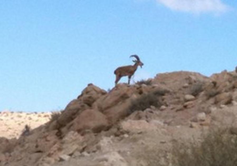 Hiking the Negev wilderness