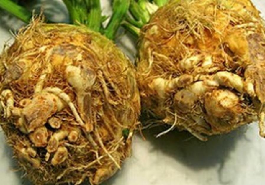 "Celeriac - an ""ugly duckling"" of vegetable world"