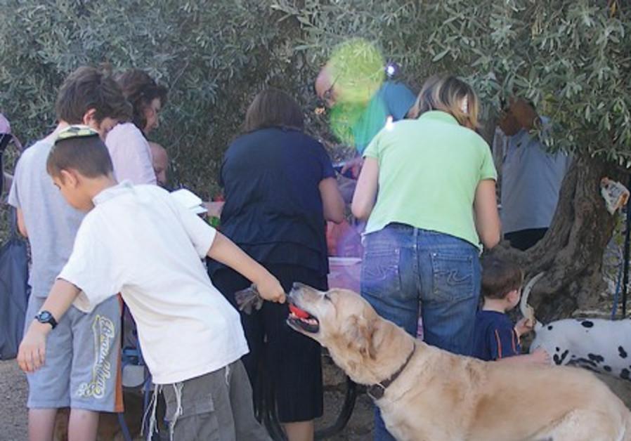 A PARTY at Jerusalem's San Simon dog park goes dow