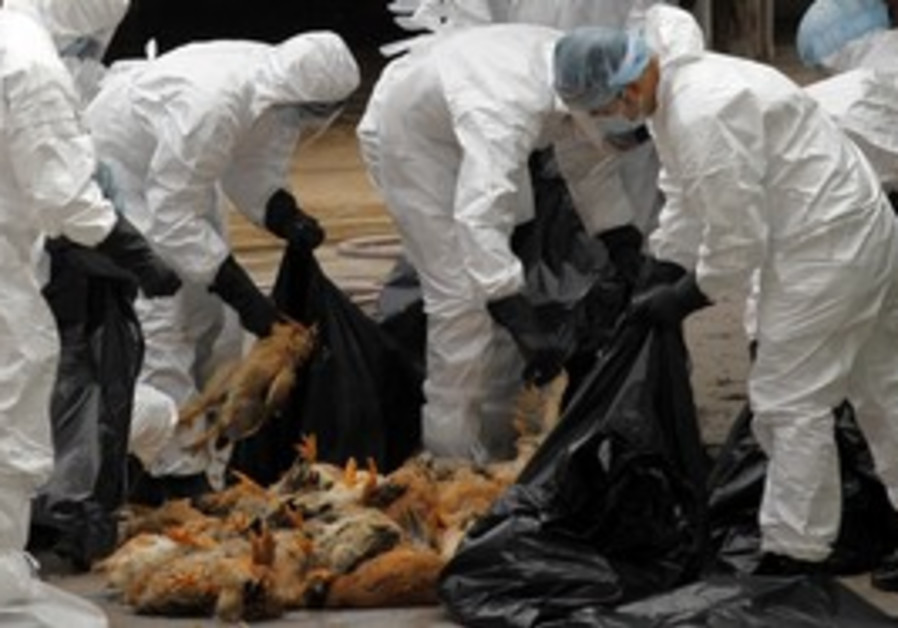 Health workers pack dead chickens in Hong Kong.