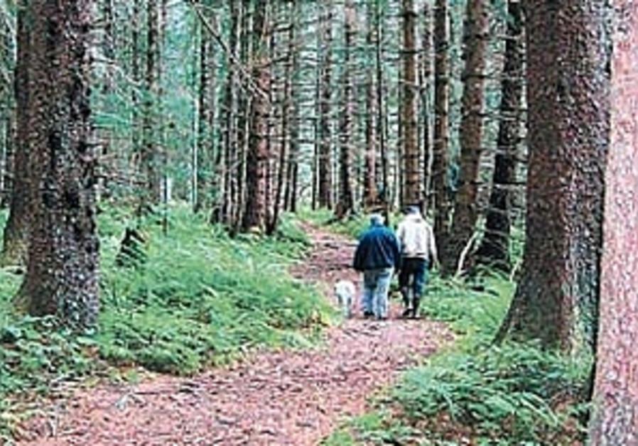Primeval forest in southeast Alaska 298