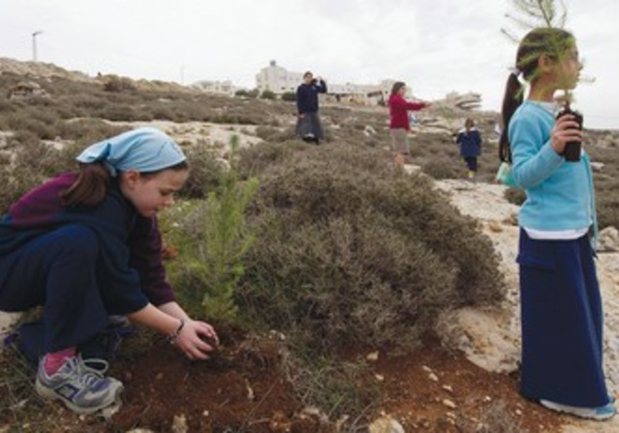 Girl plants a seedling near Hebron.