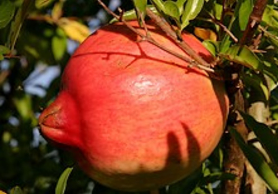 Israeli pomegranates worth their weight in gold
