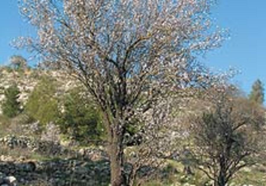 tree image 88 224