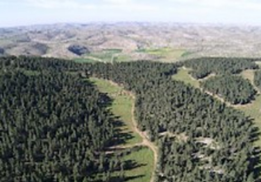 Offseting  Carbon, by Planting Trees in the Desert Green