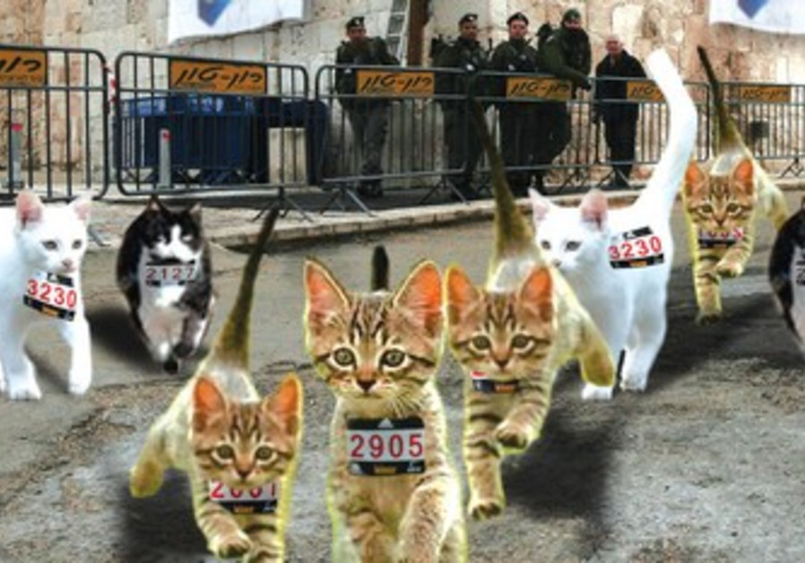 J'lem cats in training claw their way ahead.
