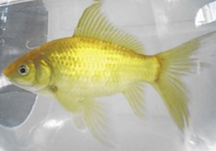 Technion turns goldfish into Parkinson's model