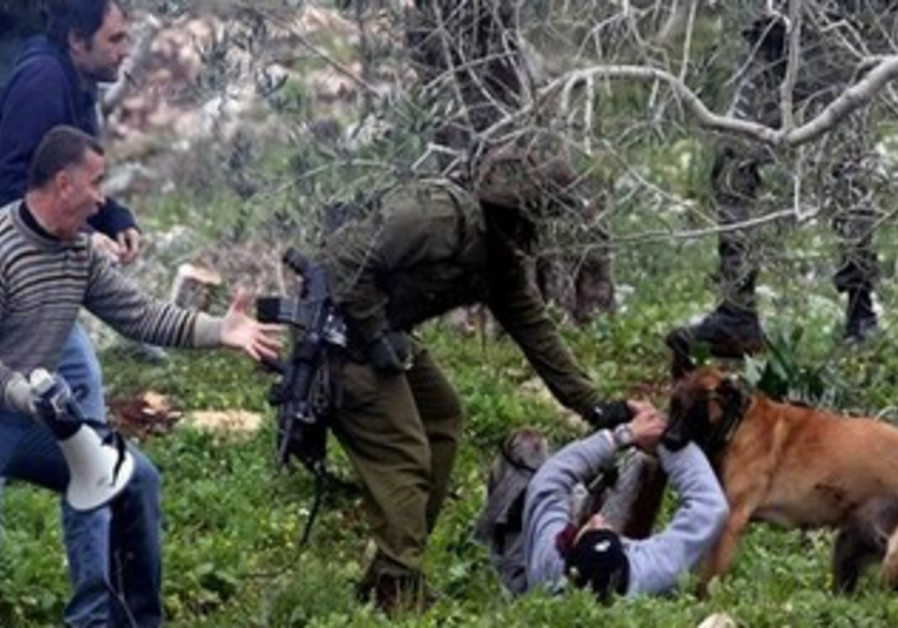 Palestinian protester bitten by IDF dog