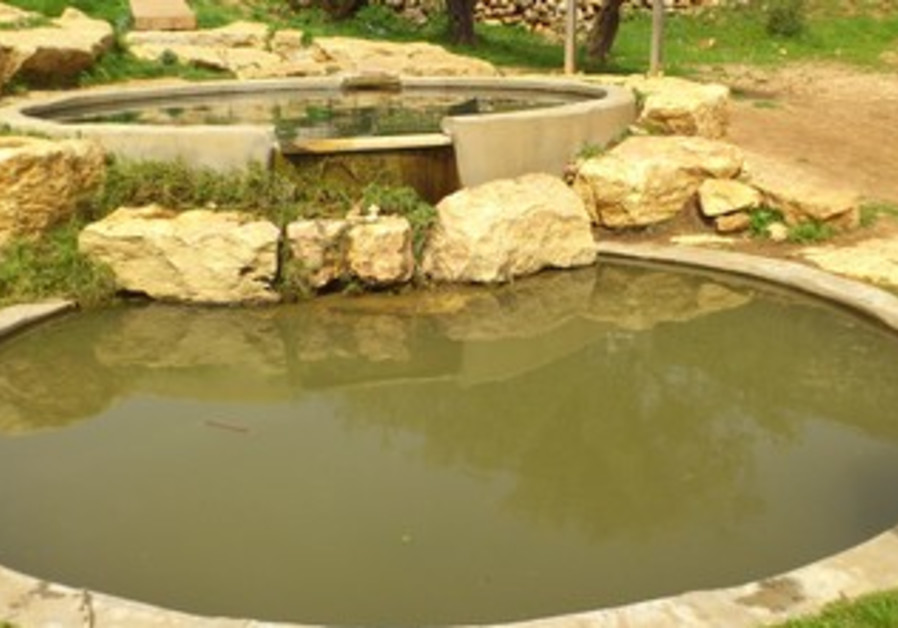 Ein Hagvura natural spring in the West Bank