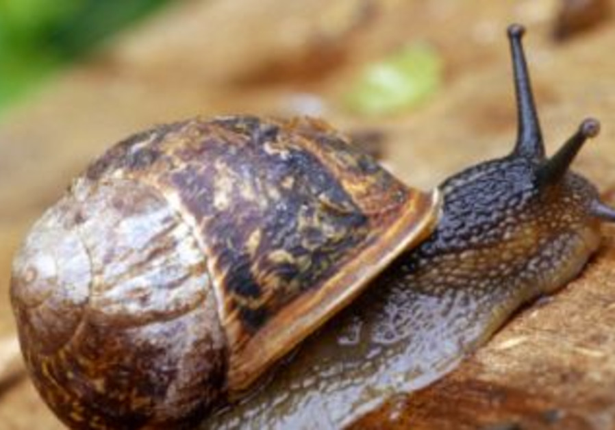 A snail is being turned into a living battery