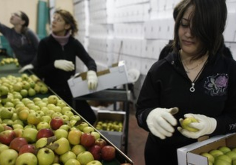 Druse women boxing apples in Buqata