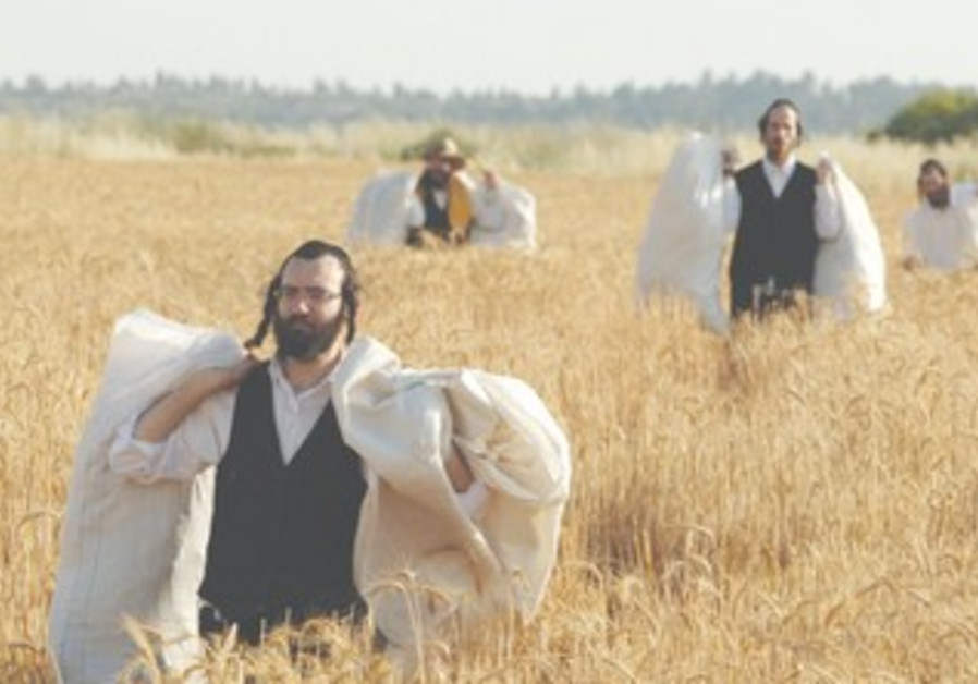 Haredim carry wheat-filled sacks for Pesah