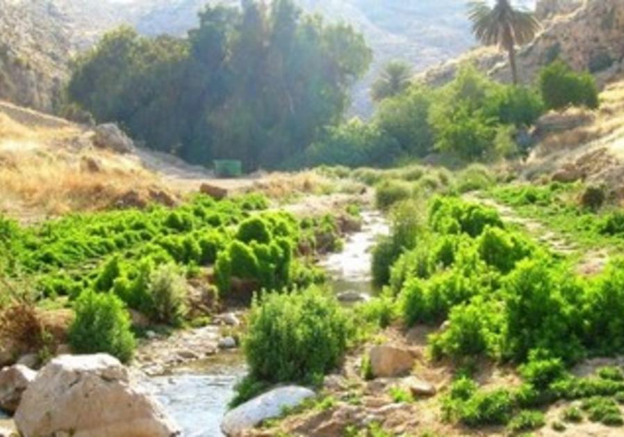Nahal Prat
