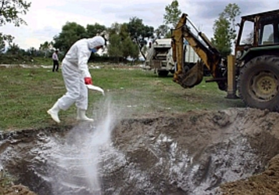 Turkey says bird flu outbreak contained