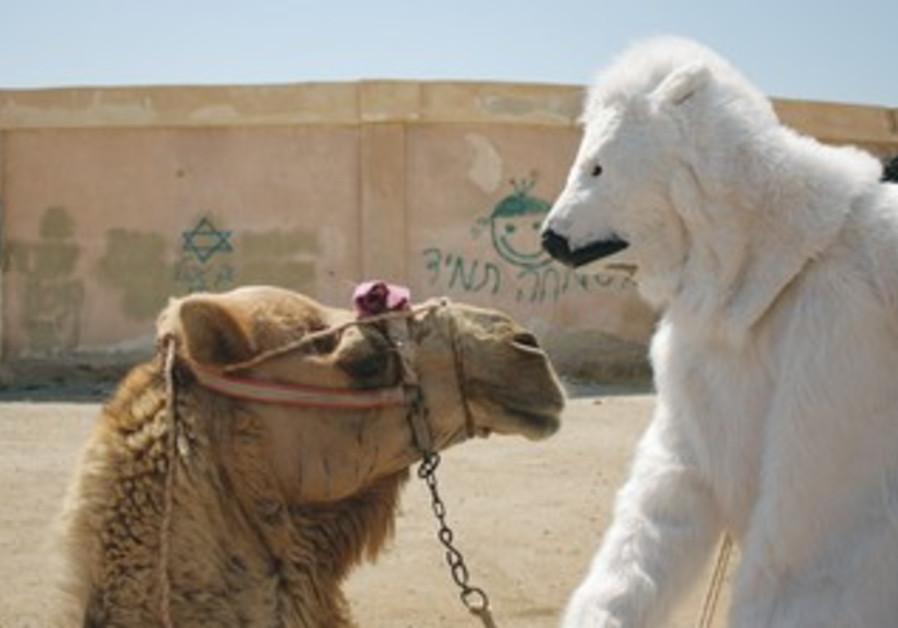 A 'POLAR BEAR' meets with a camel