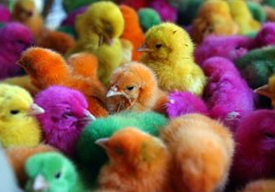 colorful birds chicks 298.88