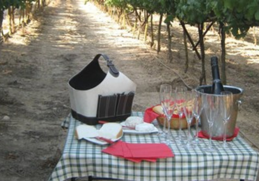 Cheese and wine in nature