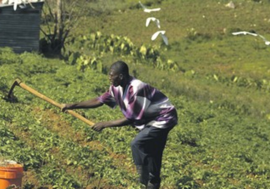 Man tending to crops outside of Port-au-Prince
