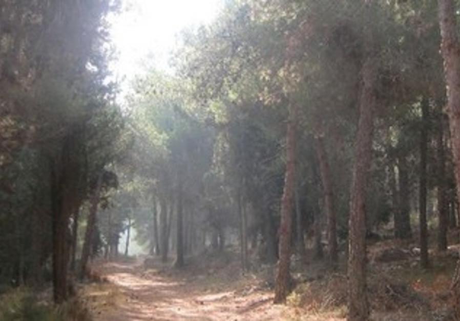 TREES IN Jerusalem's Har Adar forest