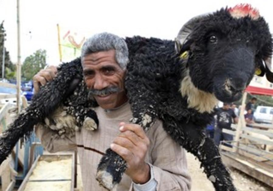 Man carries a sheep for Id al-Adha celebration