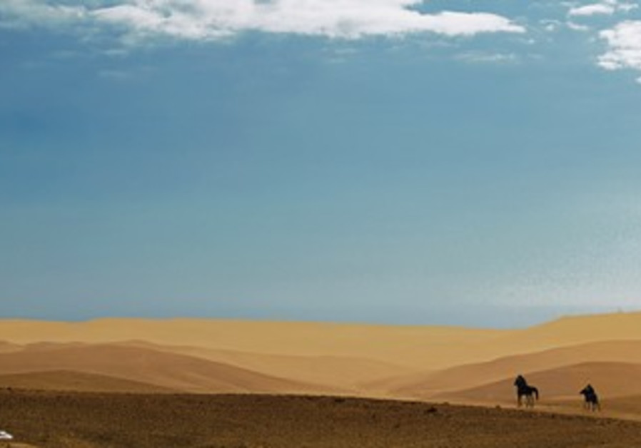 Horses in an expansive dune