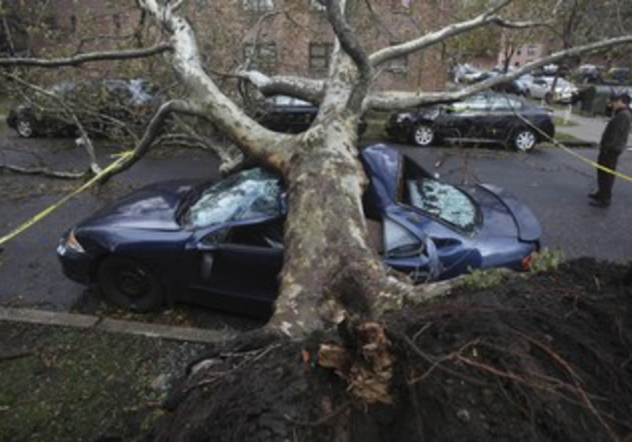 Tree felled by Sandy in NY