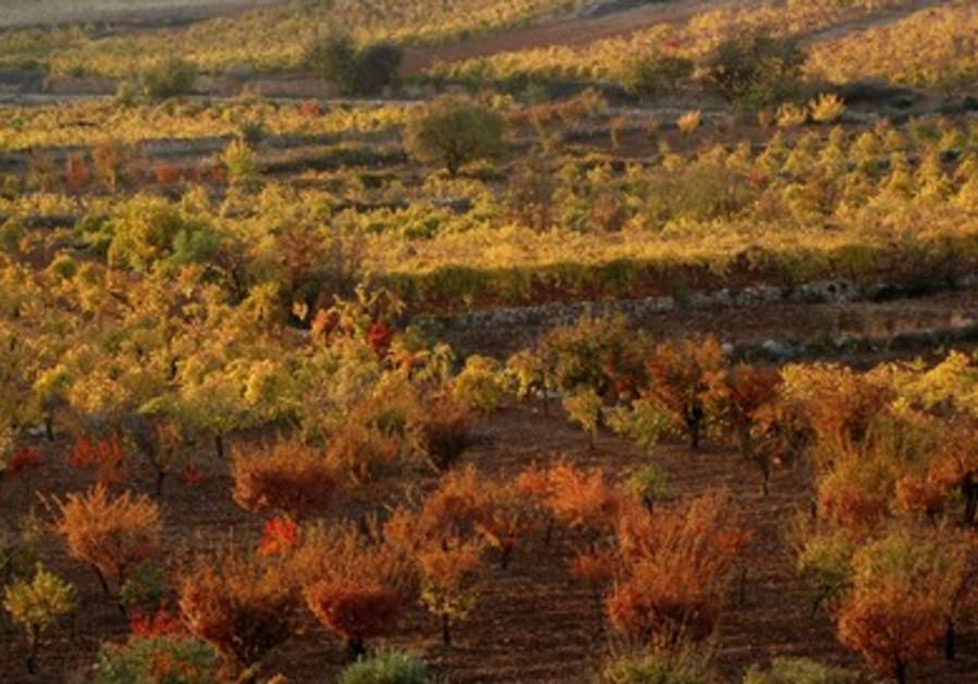 Valley below Efrat in Gush Etzion