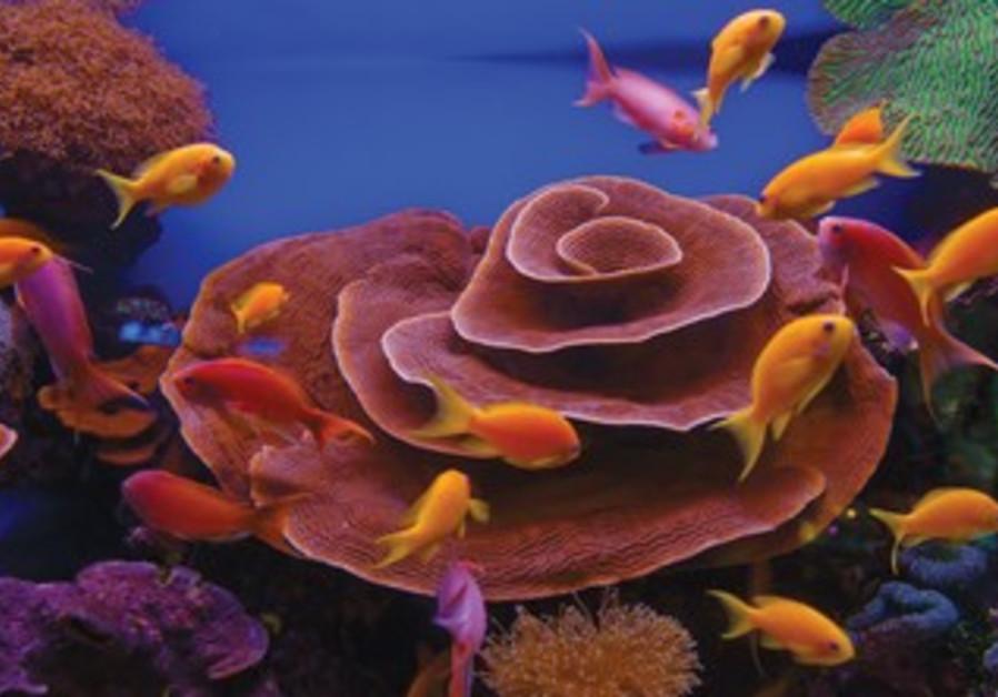 The Underwater Observatory Marine Park
