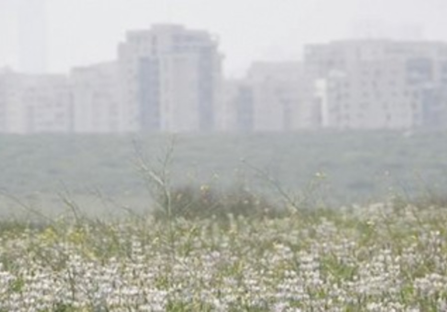 A field in the Tel Baruch nature reserve, Tel Aviv