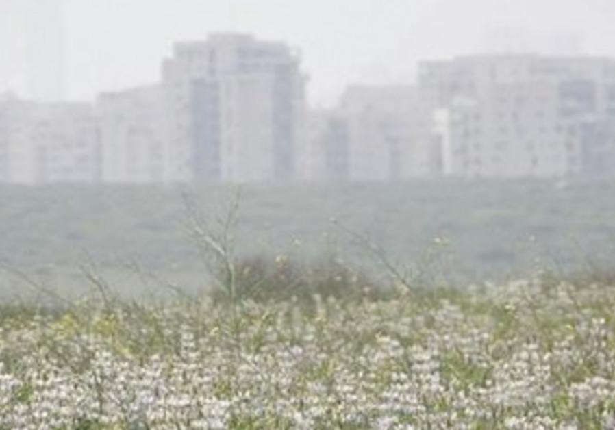 A field in the Tel Baruch nature reserve, Tel Aviv