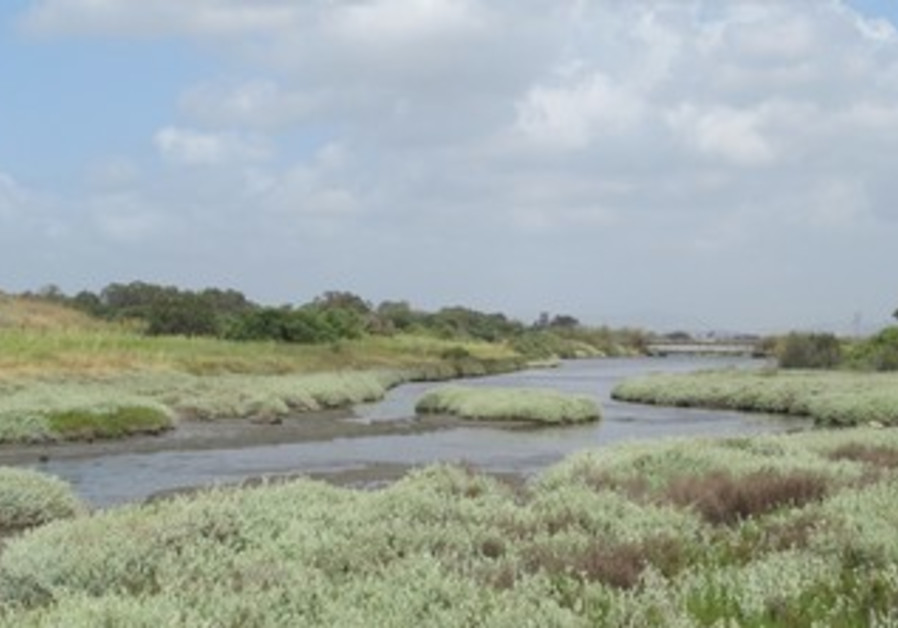Salt marshes at the Kishon River banks