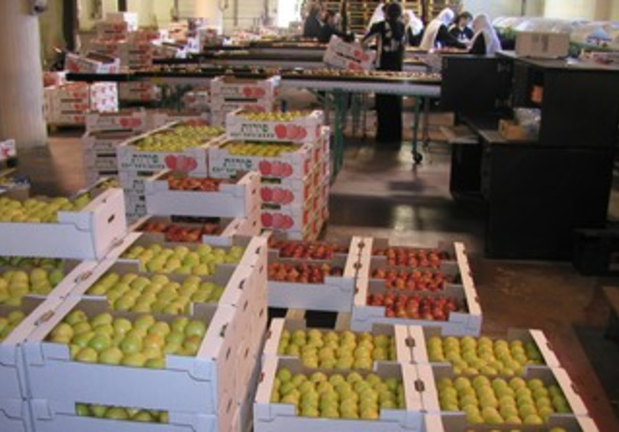 Israel's export program for Syrian Druze makes Syria the only export destination of Israeli apples.