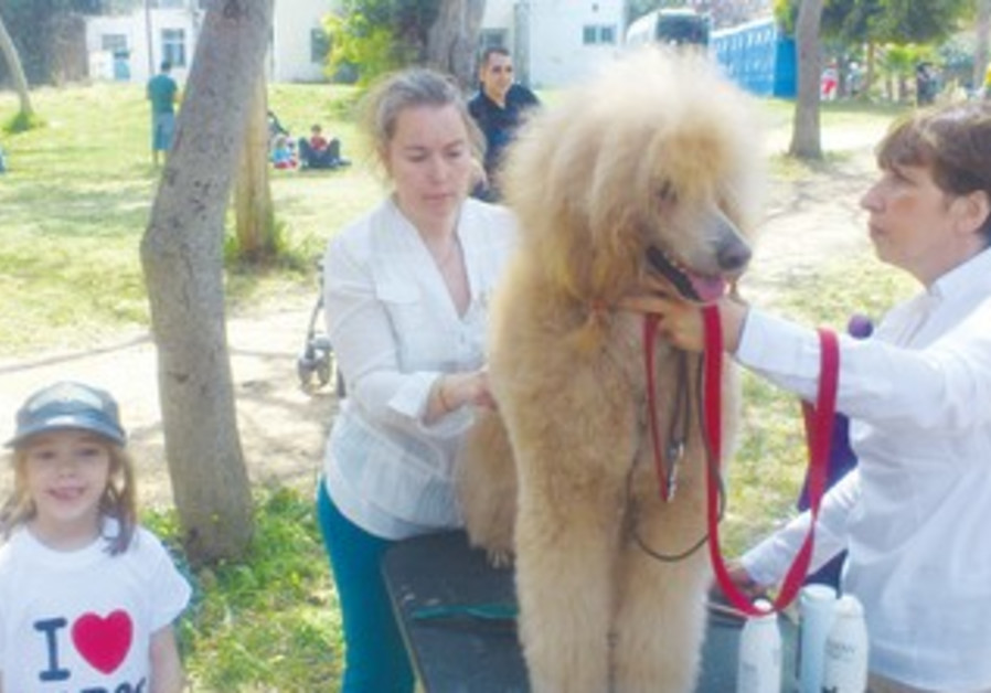 Eliana Miriam poses with a poodle prepared by groomers for contest at Festi-Pet in Holon.