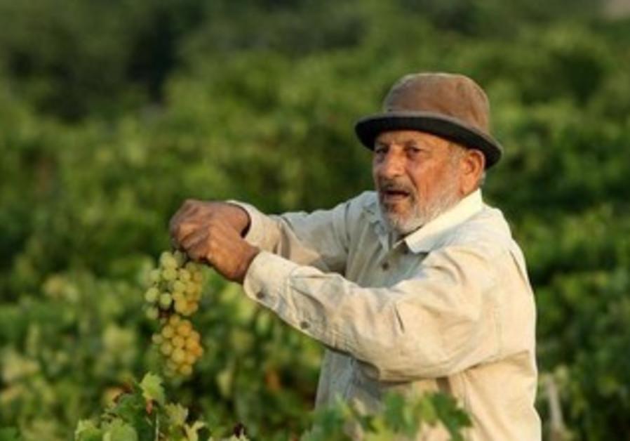 A farmer in the Gaza Strip.