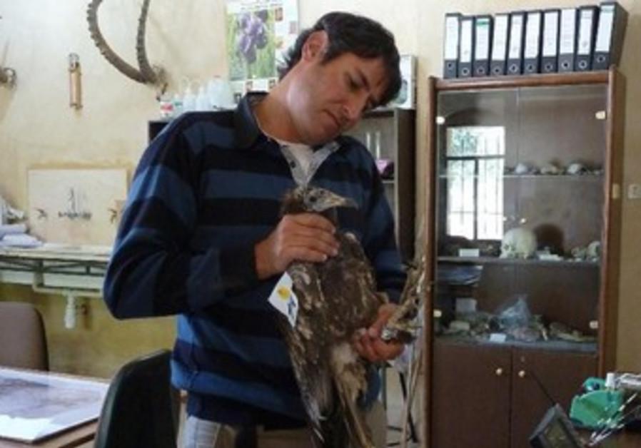 NOAM WEISS cradles the injured vulture in Jordan