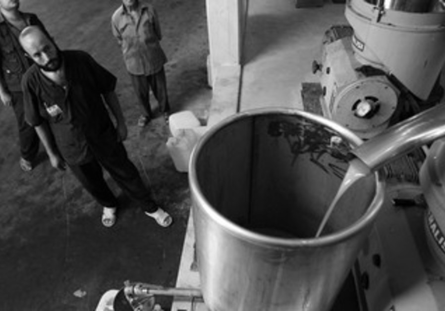 A PALESTINIAN man watches as olive oil cascades into a bucket.