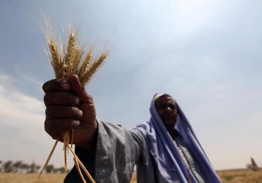 Egyptian farmer north of Cairo