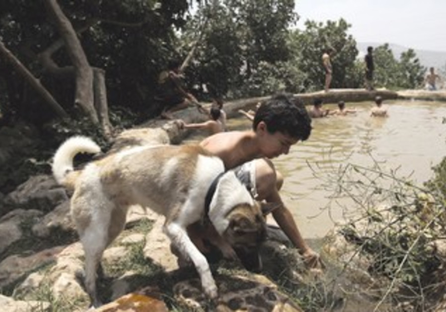 A BOY gives his dog water from the Ein Lavan spring near Jerusalem.