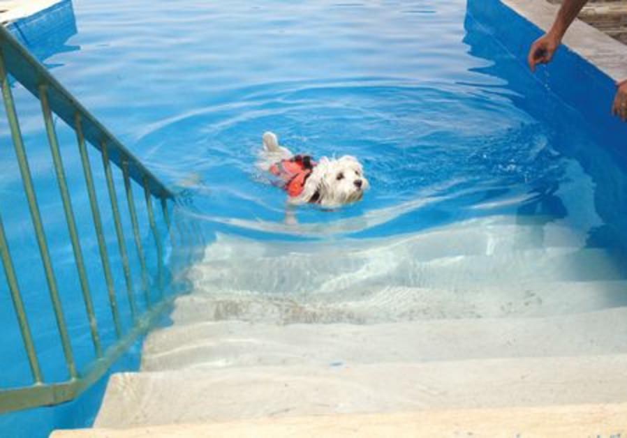 Monty Swimming