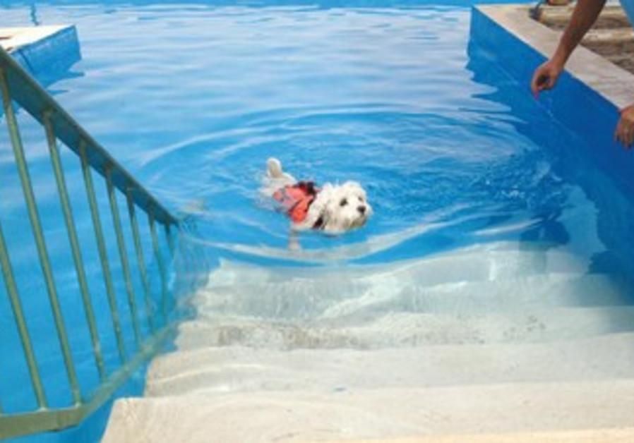 Monty apprécie la nage libre, mais n'aime guère la solitude. Ses propriétaires ont trouvé la parade.