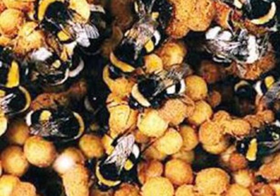Biobee: intégrer des bourdons dans les champs pour polliniser les cultures.