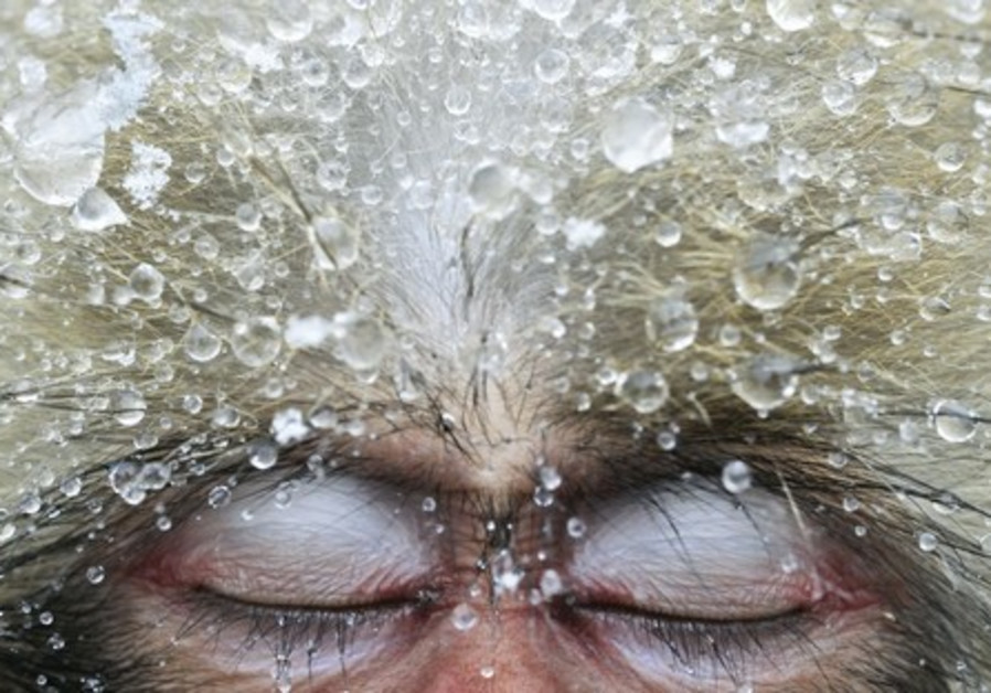 Jasper Doest, 'Relaxation,' Jigokudani, Japan, from the 'Wildlife Photographer of the Year' exhibit.