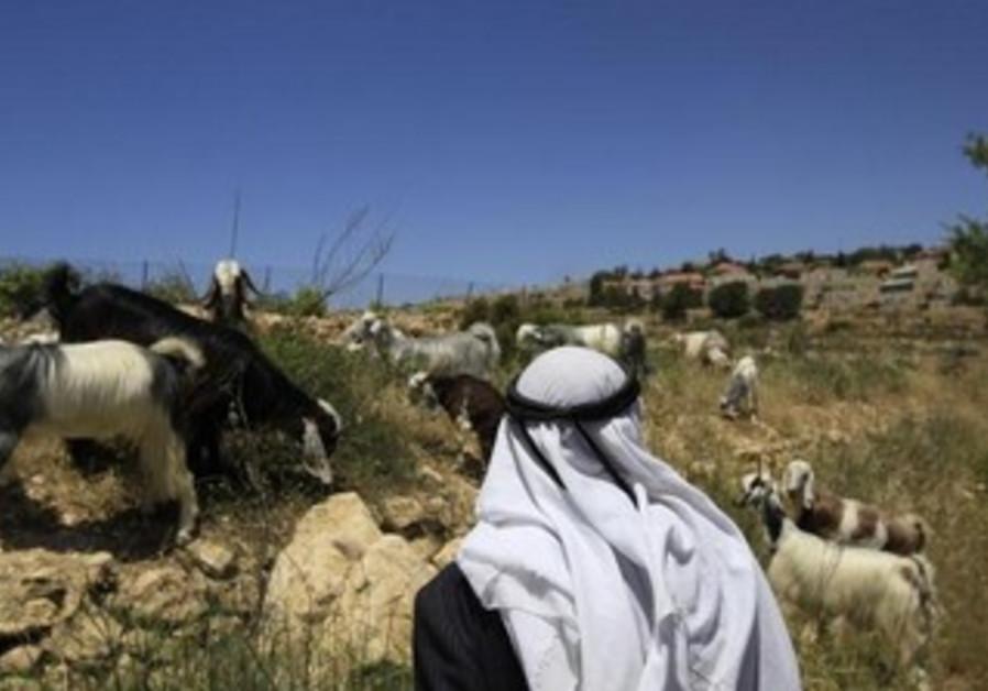 A Palestinian shepherd.